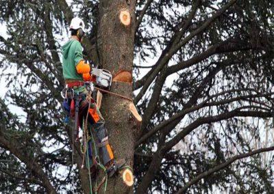C&A - Tree Surgery