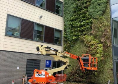 C&A Landscapes - Maintaing a Living Wall
