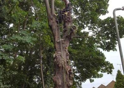 C&A Tree Surgery