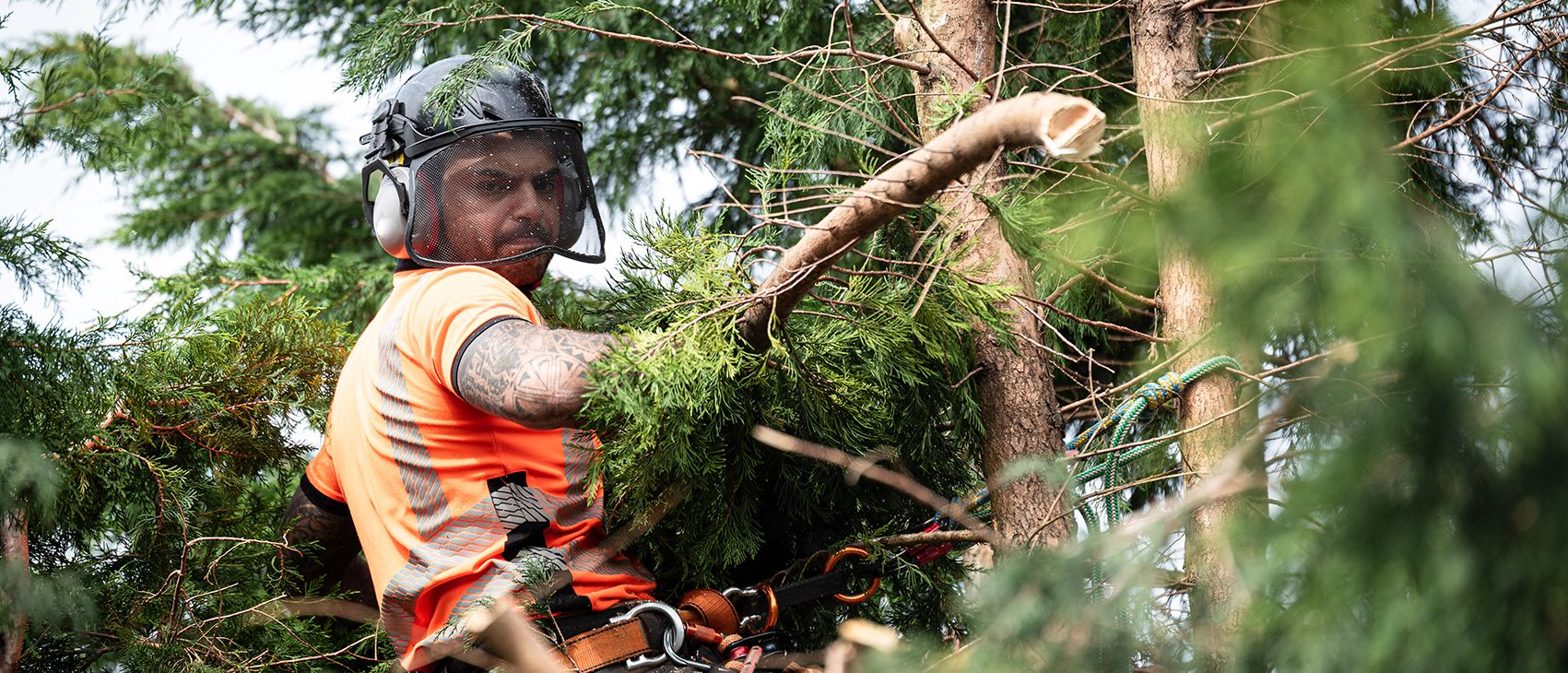 Professional standard tree care